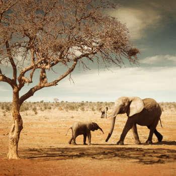 elephants9
