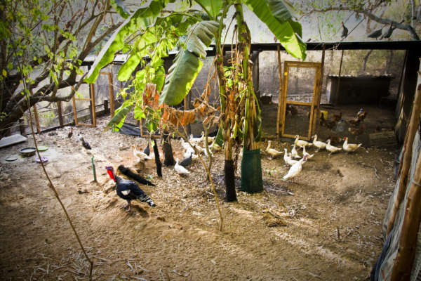chicken coop at distant relatives kilifi